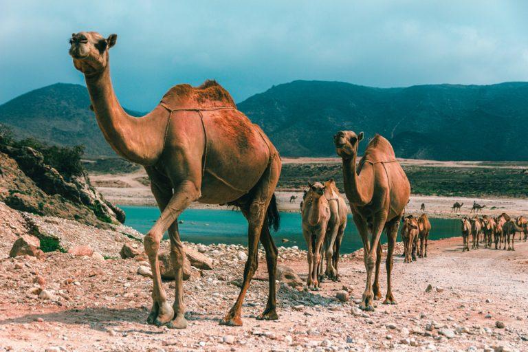 Oman – Travel Guide, Sightseeing & Insider Tips